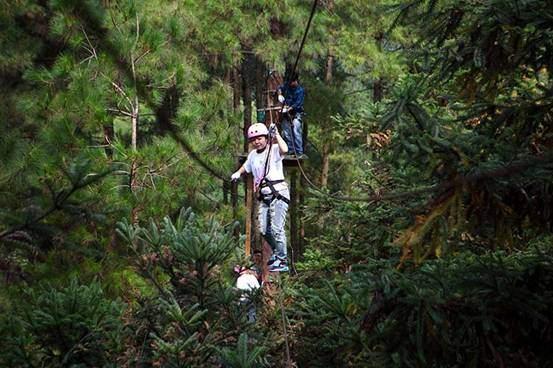 森林拓展挑战之旅图片